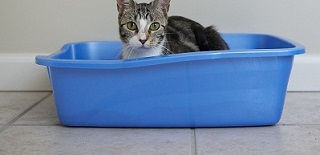 Litter box training your cat