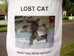 Tips on How to Find Your Lost Cat or Dog
