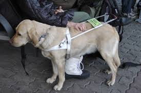The History Of Seeing Eye Dogs